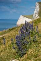 vita klippor i Jurassic Coast Beach i Dorset, Storbritannien