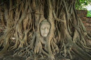 stenhuvud av buddha i omfamningen av bodhi-trädets rötter