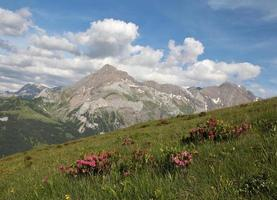 sommar i de schweiziska alperna foto