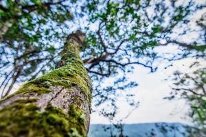träd i en tropisk skog foto