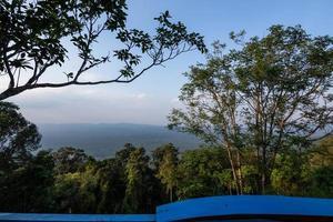 träd i den tropiska skogen foto