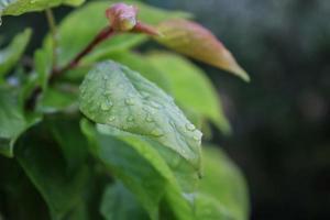 närbild av ett blad med regndroppar