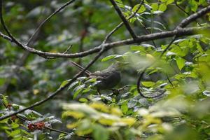 fågel i ett träd foto