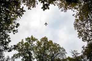 plan som flyger över träd foto