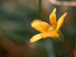 blommande gul blomma