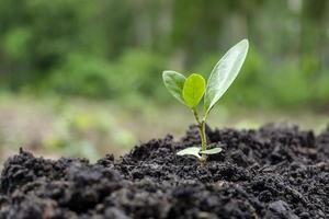 ung växt som växer i en trädgård foto