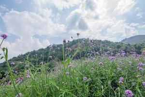 blommafält på sommaren