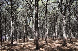 gröna lövträd på dagtid