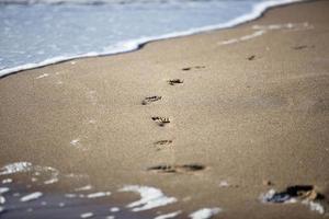 fotspår i sanden foto