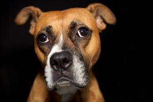 söt hund med ett roligt ansikte