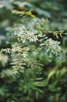 gröna blad i skogen