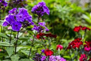 färgglada blommande blommor