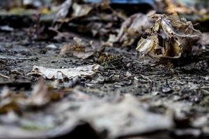 närbild av torkade höstlöv
