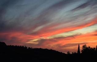 silhuett av träd under solnedgången