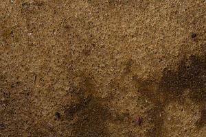 gammal svamp bakgrund