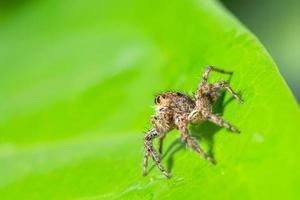 brun spindel på ett grönt blad