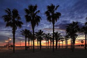 palm och soluppgång foto