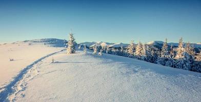 fantastiskt vinterlandskap och trampade stigar som leder in i