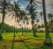 gröna palmer på grönt gräsfält foto