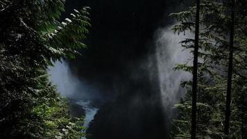 vackert ljus i skogen foto