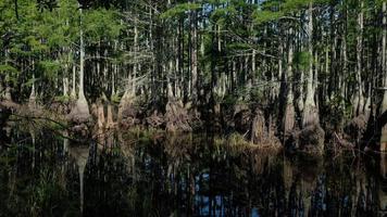 cypresser i vattnet