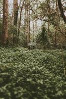 grön lund i skogsmark