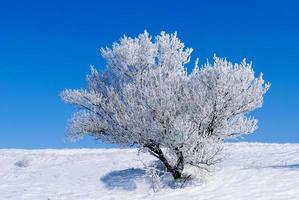 snöig träd foto