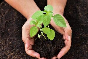 person som håller liten växt foto