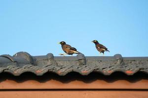 två fåglar uppe på ett tak