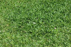 ljust grönt gräs i solskenet foto