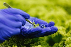 forskaren tar ett prov och lägger det i en petriskål