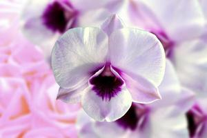 isolerad vit orkidéblomma