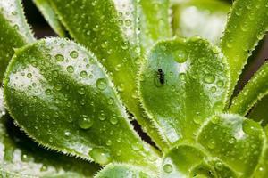myra och regndroppar på en grön växt