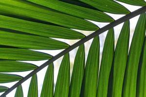 närbild av ett palmblad foto