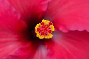 närbild av en röd blomma