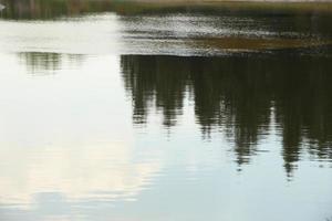reflektion av träd i vatten foto