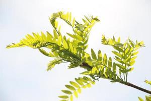 närbild av gröna blad
