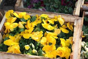 låda med gula blommor