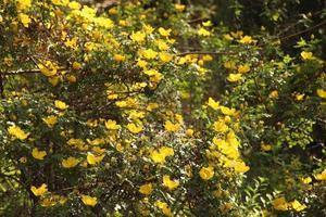 gula blommor under dagen