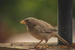 brun fågel med fågelfrö
