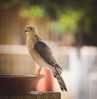 fågel på en skål foto
