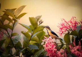 gul och svart fågel i trädgården