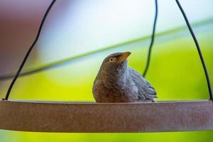 fågel sitter i en matare