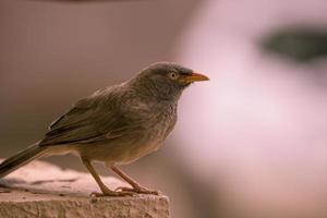 närbild av en brun fågel