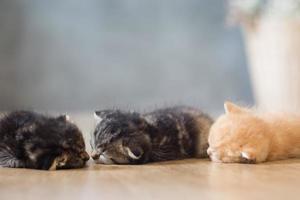 söt kattunge sover på trägolv foto