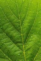 regndroppar på ett blad