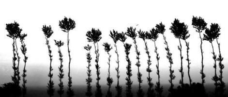 panorama med tunna träd
