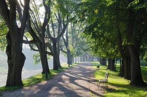vitryssland, nesvizh. solig morgon i parken foto