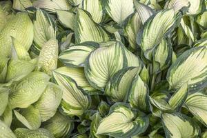 vackert grönt blad med regndroppar