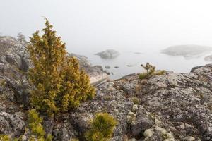 dimma på stenig kust av sjön. vårlandskap foto